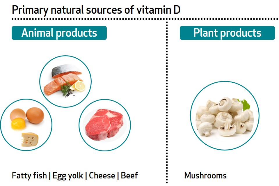 Learn About Your Vitamins And Minerals Vitamin D And Calcium Bioanalyt